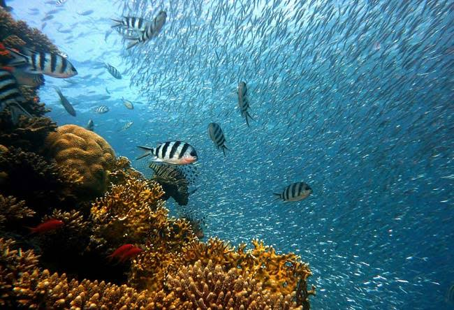Mares y océanos enfermos, otra pandemia