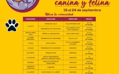 Inicia la semana de vacunación canina y felina en el municipio de Chiautempan