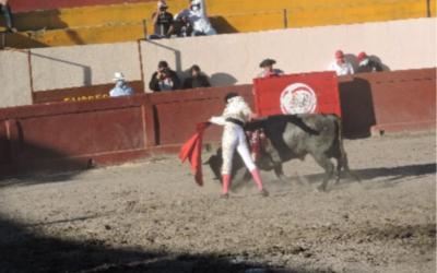 """""""EL MOJITO"""" CORTO UNA OREJA EN APIZACO"""